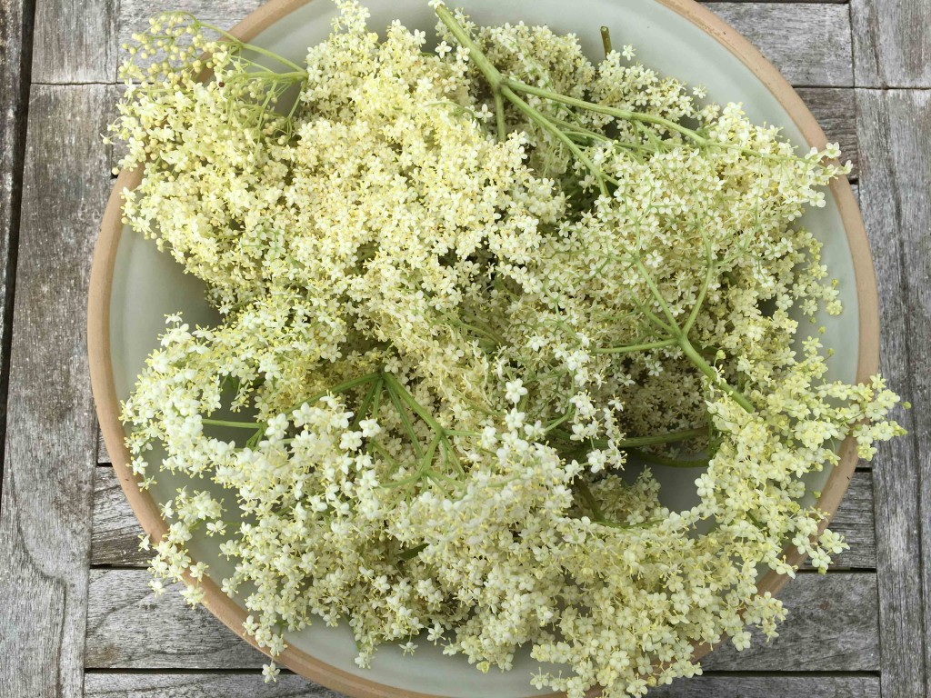 Elderflower 5